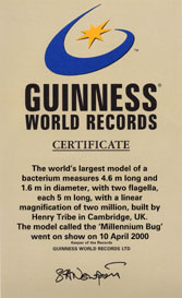 E.coli Model Guiness World Record Certificate